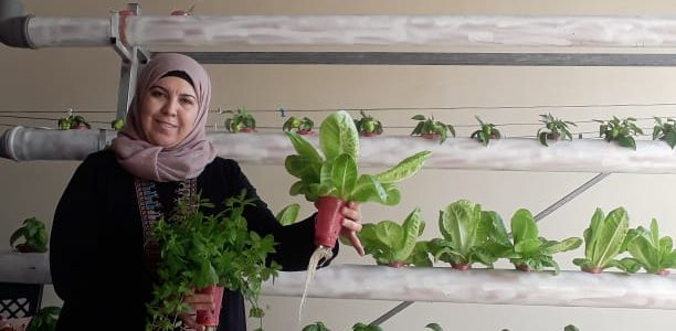 In a joint project conducted earlier this year, the Workers Advice Center WAC-MAAN and Sindyanna of Galilee trained a group of women from the village of Baqa al-Gharbiyye to grow […]